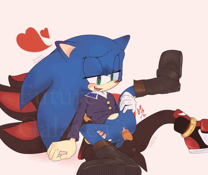 shadow the rouge and hedgehog A cat is fine too imgur